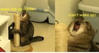 Evanescence cat: wake me up inside  (can't wake up) Evanescence cat
