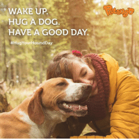 Sounds like a good plan to us! 🐾 #HugYourHoundDay: WAKE UP  HUG A DOG  HAVE A GOOD DAY.  Sounds like a good plan to us! 🐾 #HugYourHoundDay