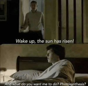 what do you want: Wake up, the sun has risen!  And what do you want me to do? Photosynthesis?