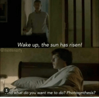 Memes, Photosynthesis, and 🤖: Wake up, the sun has risen!  @memeriarty  And what do you want me to do? Photosynthesis? Credit: Memeriarty