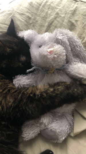 Cat, Bunny, and Wake: Wake up to my cat snuggling my stuffed bunny