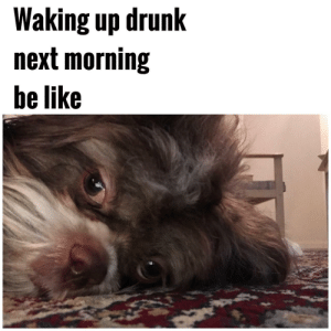 Drunk Mornings by Apollo-Quan FOLLOW 4 MORE MEMES.: Waking up drunk  next morning  be like Drunk Mornings by Apollo-Quan FOLLOW 4 MORE MEMES.