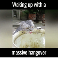 The thirst is real after a heavy night out 😂😂  via Newsflare: Waking up with a  massive hangover The thirst is real after a heavy night out 😂😂  via Newsflare