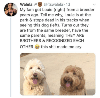 <p>Dog siblings!</p>: Walela @itswalela 1d  My fam got Louie (right) from a breeder  years ago. Tell me why, Louie is at the  park & stops dead in his tracks when  seeing this dog (left). Turns out they  are from the same breeder, have the  same parents, meaning THEY ARE  BROTHERS & RECOGNIZED EACH  OTHER  this shit made me cry <p>Dog siblings!</p>