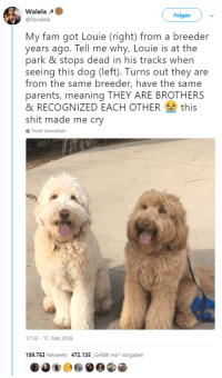 """<p>Wholesome dog family meeting in the park via /r/wholesomememes <a href=""""https://ift.tt/2IS508t"""">https://ift.tt/2IS508t</a></p>: Walela  @itswalela  Folgen  My fam got Louie (right) from a breeder  years ago. Tell me why, Louie is at the  park & stops dead in his tracks when  seeing this dog (left). Turns out they are  from the same breeder, have the same  parents, meaning THEY ARE BROTHERS  & RECOGNIZED EACH OTHERthis  shit made me cry  Tweet übersetzen  17:33-17. Mai 2018  09.763 Retweets 472.135,Gefallt mir-Angaben <p>Wholesome dog family meeting in the park via /r/wholesomememes <a href=""""https://ift.tt/2IS508t"""">https://ift.tt/2IS508t</a></p>"""