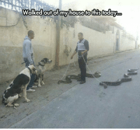 srsfunny:  The Snake King: Walked outofmy house to this today. srsfunny:  The Snake King