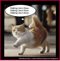 Lmao!!! https://t.co/CB3xiZIWRA #funnypictures #funny #lmao #smile #lol #funnycats https://t.co/GGYa6ZQiB2: Walking Like A Boss  Walking Like A Boss...  Walking Like A Boss  DollarStoreCrafter I cowiescraftandcookingcorner.blogspot.ca Lmao!!! https://t.co/CB3xiZIWRA #funnypictures #funny #lmao #smile #lol #funnycats https://t.co/GGYa6ZQiB2