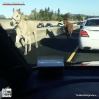 "Horses, Memes, and Mondays: Walnut Craex, CA  FOX  NEWS  Twitter/slimjanders ""Two horses were running loose in California during Monday's morning rush, racing around local streets before heading onto the interstate. About an hour after the first calls started coming in, the CaliforniaHighwayPatrol, Walnut Creek Police and Contra Costa County Animal Control were able to catch the horses and safely return them to their owner."" 👀🐴 @foxnews WSHH"