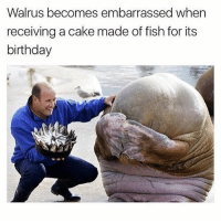 An actual photo of me 😩😭💯(@x__antisocial_butterfly__x): Walrus becomes embarrassed when  receiving a cake made of fish for its  birthday An actual photo of me 😩😭💯(@x__antisocial_butterfly__x)