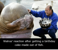 Aww....😍💕💕: Walrus' reaction after getting a birthday  cake made out of fish. Aww....😍💕💕