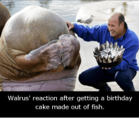 walruse: Walrus' reaction after getting a birthday  cake made out of fish.