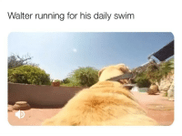 "Bless Up, Boo, and Cheetos: Walter running for his daily swim One of my followers commented: ""why do dog paws smell like Fritos? I still love them 😊."" See this raise a very important issue about women and that is, if she love u, she gon find nasty things endearing, whereas if she don't fvck with u no more, she gon find nasty things HELLA NASTY. Case in point... 1) Fritos that smell like Fritos = yummy 😂. Don't let nobody tell u different. When u was a kid and u seen them little bags with the yellow and maroon package boy it was on like all type of donkey kong. Deerishis. (2) Dog paws that smell like Fritos = bueno! C'mon now if a dog stink a lil bit that's expected. He a animal. He ain always gon smell like rosebuds. (3) Humans that smell like Fritos = IT DEPEND 😂. Bruv u give a girl that soul-snatching, Nani wall chakra realigning, organ rearranging deep Pipington? Where the stomach end up where a lung should be and her liver trade places with her kidney bruv? Then it don't matter no more. U could smell like Fritos. Cheetos. Bruv u could smell like a 17 lb slab of aged Camembert cheese on it, it don't matter. She gon be texting her friend the next day (with a pack of iced peas on her Nani because she can't move 😊) talmbout ""GURRRRRL. WHY THIS MAN TAKE HIS DRAWLS OFF LAST NIGHT AND THE WHOLE ROOM SMELL LIKE FRITOS 😂 lmaooo 😂 Nah but he coming over again tonight doe 😆 we in the middle of a Seinfeld marathon. We bout to get to the episode where Costanza rock the big a$$ down coat u remember that one? Anyway girl lemme holla at u AYE like my last pic if u don't mind bye boo!"" 😂 But let that lil situationship end bruv? Oh now he ain't cute at all. ""GIRL I AM DONE WITH THAT MAN. CAN'T RETURN A TEXT. DON'T CLIP HIS FINGERNAILS. STANKY SMELLIN A$$, I AM DONE."" But her friend ain't getting them texts. Nope. Because her 'friend' is at Mr. Frito's crib, putting toilet paper around the toilet bowl so she can pee bc his place filthy 😂. But see that's when she knew the pipe game was beyond exquisite bc nobody would find frito smell cute unless dude was going Ham and Bananington on the Nani so she went to see for herself and now she supporting dude and paying his cell phone bill 😊. Y'all be safe now! Bless up 😂😂😂"