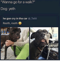 """Memes, Wshh, and 🤖: Wanna go for a walk?""""  Dog: yeth  he gon cry in tha car @_Taiiii  Rooth, rooth """"Rooth Rooth!"""" 😂🐶 WSHH"""