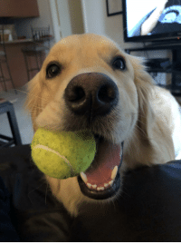 Wanna play catch?!?!(x-post r/pics): Wanna play catch?!?!(x-post r/pics)