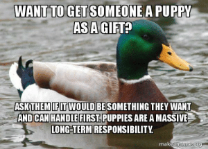 Coming from someone that got a puppy as a gift on the day I got married.: WANT TO GETSOMEONE A PUPPY  ASA  GIFTA  ASK THEM!EIT WOULDBESOMETHING THEY WANT  AND CAN HANDLEFIRST.PUPPIES ARE A MASSIVE  ONG-TERM RESPONSIBILITY  makeameme ora Coming from someone that got a puppy as a gift on the day I got married.
