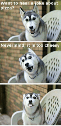 Nevermind, its to cheesy 😂😂: Want to hear a joke about  pizza?  Nevermind, it is too cheesy Nevermind, its to cheesy 😂😂