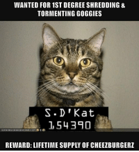 Lifetime, Com, and Wanted: WANTED FOR 1ST DEGREE SHREDDING &  TORMENTING GOGGIES  S.D'Kat  1543A0  REWARD: LIFETIME SUPPLV OF CHEEZBURGERZ  İCANHASCHEEZBURGER.COM.ee