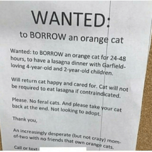 Kinda wholesome: WANTED:  to BORROW an orange cat  Wanted: to BORROW an orange cat for 24-48  hours, to have a lasagna dinner with Garfield-  loving 4-year-old and 2-year-old children.  Will return cat happy and cared for. Cat will not  be required to eat lasagna if contraindicated.  Please. No feral cats. And please take your cat  back at the end. Not looking to adopt.  Thank you  An increasingly desperate (but not crazy) mom  of-two with no friends that own orange cats  Call or text: Kinda wholesome
