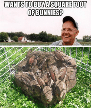 Bunnies, Tumblr, and Blog: WANTS TO BUYA SQUAREFOOT  OF BUNNIES? epicjohndoe:  Square Foot Of Fluffiness