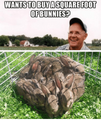 Bunnies, Tumblr, and Blog: WANTS TO BUYA SQUAREFOOT  OF BUNNIES? srsfunny:Square Foot Of Bunnies
