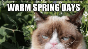 Funny Spring Memes
