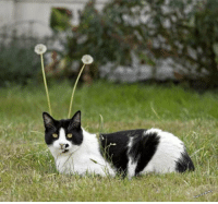 Undeniable proof that cats are aliens: warnelws Undeniable proof that cats are aliens
