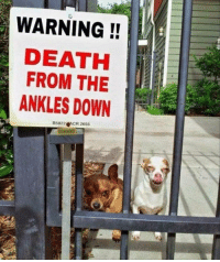 30 Of The Most Hilarious Animal Pictures That Will Make Your Day: WARNING!  DEATH  FROM THE  ANKLES DOWN  85822 GACR 2655 30 Of The Most Hilarious Animal Pictures That Will Make Your Day
