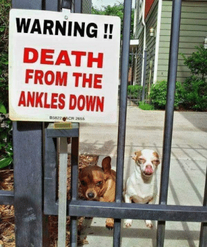 BEWARE OF DOG!!!!: WARNING!!  DEATH  FROM THE  ANKLES DOWN  B5822 ACR 2655 BEWARE OF DOG!!!!