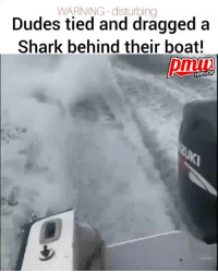 A disturbing video of a shark being dragged behind a boat has prompted an investigation by officials in Florida. - FULL VIDEO AND STORY AT PMWHIPHOP.COM LINK IN BIO sharkweek: WARNING -disturbing  Dudes tied and dragged a  Shark behind their boat!  pmiv  HIPHOP A disturbing video of a shark being dragged behind a boat has prompted an investigation by officials in Florida. - FULL VIDEO AND STORY AT PMWHIPHOP.COM LINK IN BIO sharkweek