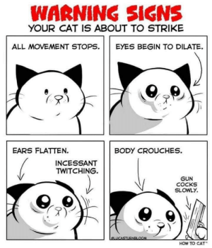 Funny, How To, and How: WARNING SIGNS  YOUR CAT IS ABOUT TO STRIKE  ALL MOVEMENT STOPS EYES BEGIN TO DILATE.  EARS FLATTEN.  BODY CROUCHES.  INCESSANT  TWITCHING.  GUN  COCKS  SLOWLY.  HOW TO CAT Cat Warning Signs via /r/funny https://ift.tt/2J9SRJR