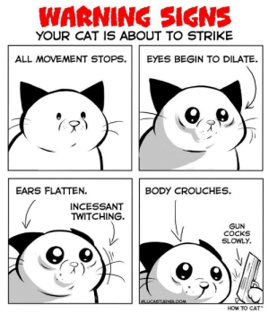 Funny, Life, and How To: WARNING SIGNS  YOUR CAT IS ABOUT TO STRIKE  ALL MOVEMENT STOPS. EYES BEGIN TO DILATE.  EARS FLATTEN.  BODY CROUCHES.  INCESSANT  TWITCHING.  GUN  COCKS  HOW TO CAT Know the signs. They may just save your life. via /r/funny https://ift.tt/2AutO38