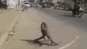 Target, Tumblr, and Blog: warriormale:  Two lizards fighting! Amazing! Train and fight! WarriorMale