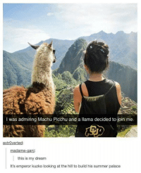 machu picchu: was admiring Machu Picchu and a llama decided to join me.  extroverted  madame-gani:  this is my dream  It's emperor kuzko looking at the hill to build his summer palace