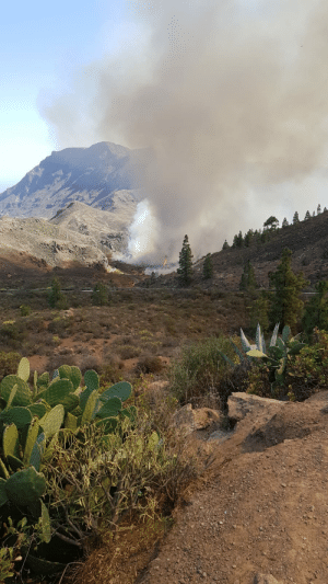 Driving, Fire, and Police: Was driving home with my scooter. Road was closed due to a wildfire. The fire spreaded so fast that the police came and said we needed to go. Unfortunatly my route back was this road, had to drive an hour extra (Gran Canaria)