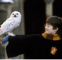 Was Hedwig's death really necessary? - One thing to remember is that St. Hedwig is the patron saint of orphans. The name symbolizes why she was so important to Harry. - Check out the Hogwarts Express Emporium, the finest magical products in the Wizarding world. - Free Owl Postal Service - View Now, Link in Bio - WWW.GEEKOUTTRENDS.COM: Was Hedwig's death really necessary? - One thing to remember is that St. Hedwig is the patron saint of orphans. The name symbolizes why she was so important to Harry. - Check out the Hogwarts Express Emporium, the finest magical products in the Wizarding world. - Free Owl Postal Service - View Now, Link in Bio - WWW.GEEKOUTTRENDS.COM