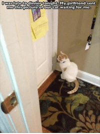 Memes, 🤖, and My Girlfriend: was late to dinner tonight My girlfriend sent  me this  of our Cat waiting for me.  picture