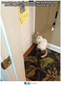 Memes, Girlfriend, and Waiting...: was late to dinner tonight My girlfriend sent  me this  of our Cat waiting for me.  picture GEf Postize