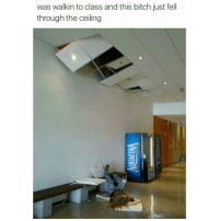 Bitch, Movies, and Tumblr: was walkin to class and this bitch just fell  through the ceiling Is this that diarrhea scene from not another teenage movie?! 🤔