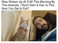 Dank Memes, Asshole, and How: Was Woken Up At 2:45 This Morning By  This Asshole. I Don't Own A Cat. Is This  How You Get A Cat? This is how I got a cat