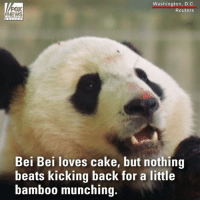 Visitors to the NationalZoo got to celebrate Bei Bei the giant panda's second birthday on Tuesday.: Washington, D.C.  Reuters  NEWS  Bei Bei loves cake, but nothing  beats kicking back for a little  bamb00 munching. Visitors to the NationalZoo got to celebrate Bei Bei the giant panda's second birthday on Tuesday.