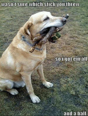 Time, Got, and Dog: Wasn't sure which stick you threw  SO i got em all  and a ball Every time i take my dog to the park