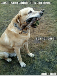 Tumblr, Blog, and Http: wasn't Sure which stick you threw  soi gotem all  and a ballI srsfunny:The Retriever Spirit Is Strong With This One