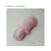 Animals, Funny, and Watch: watch for a surprise  @dog The cutest thing ever (@animals.hilarious)