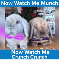 Memes, Watch Me, and 🤖: Watch Me Munch  Now f Alfie & Biscuit  Now Watch Me  Crunch Crunch Alfie & Biscuit are the cutest pair out there! #onedip