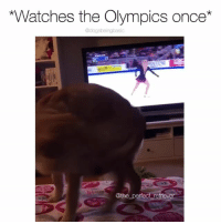 Memes, Watches, and Olympics: *Watches the Olympics once*  @dogsbeingbasic  @the perfect retriever Oh quadruple axle? I got that. Pup @the_perfect_retriever