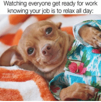 """""""Have fun at work human lol""""-dogs @walterthechi: Watching everyone get ready for work  knowing your job is to relax all day. """"Have fun at work human lol""""-dogs @walterthechi"""