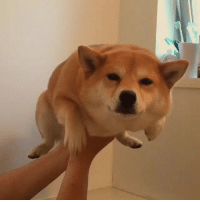 Water Doge (x-post from GIFS): Water Doge (x-post from GIFS)