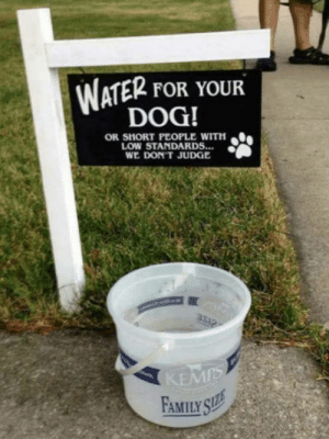 Family, Memes, and Water: WATER FOR YOUR  DOG!  OR SHORT PEOPLE WITH  LOW STANDARDS...  WE DON'T JUDGE  KEMIS  FAMILY SLEE This gave me a chuckle!