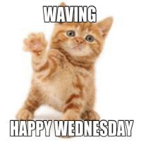 Good morning, Cat Lovers! Happy Whiskers Wednesday!: WAVING  HAPPY WEDNESDAY Good morning, Cat Lovers! Happy Whiskers Wednesday!