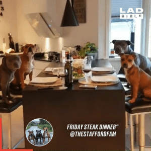 "Dank, Friday, and Bible: WAY  FLRE  LAD  BIBLE  FRIDAY STEAK DINNER""  @THESTAFFORDFAM Just patiently waiting for their dinner 🐶🍽"